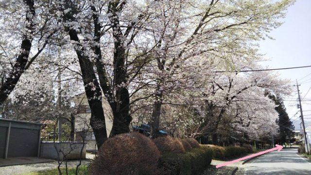 春限定のコースを進む写真