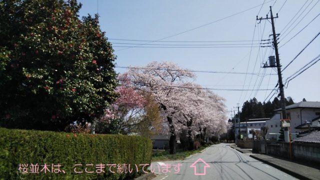 春限定の寄り道コースの反対側を撮影した写真
