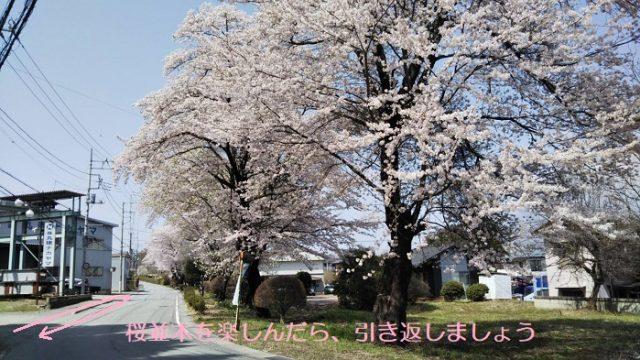 春限定の寄り道コースを撮影した写真