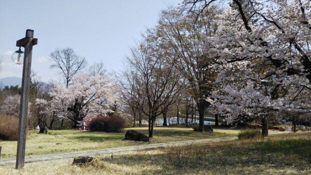 オオムラサキセンターの桜を撮影した写真