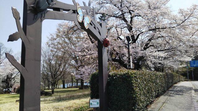 オオムラサキセンター徒歩用の入り口の桜を撮影した画像