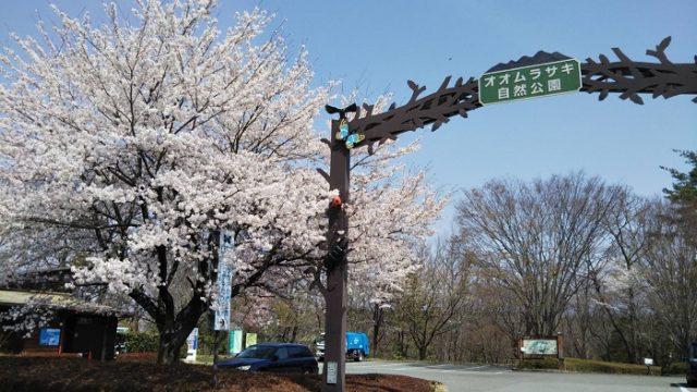 オオムラサキセンター車用の入り口の桜を撮影した画像
