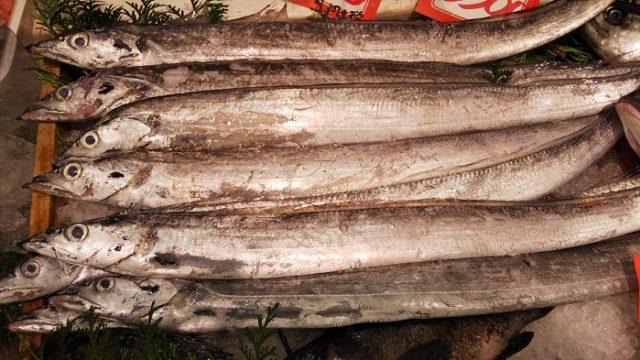太刀魚を撮影した写真