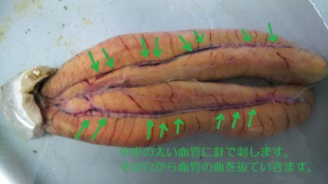 ボラの卵の血を抜く説明の写真