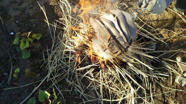 カツオの裏側もワラ焼きにする写真